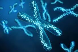 Kekurangan Kromosom